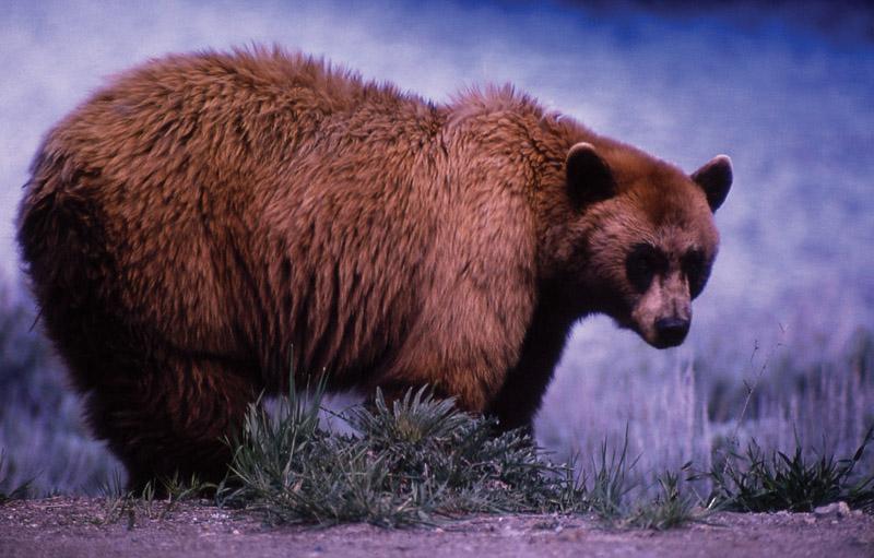 Йеллоустонский национальный парк (35)