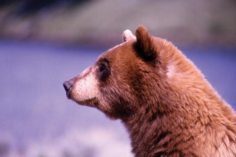 Йеллоустонский национальный парк (34)