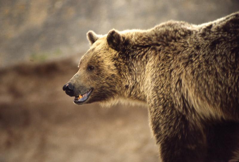 Йеллоустонский национальный парк (33)