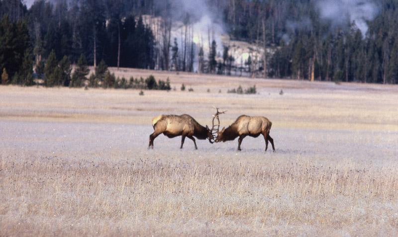 Yellowstone - Йеллоустонский национальный парк (32)