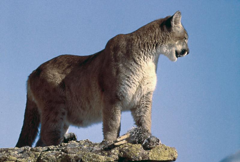 Йеллоустонский национальный парк (30)