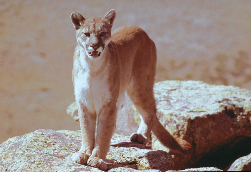 Йеллоустонский национальный парк (28)
