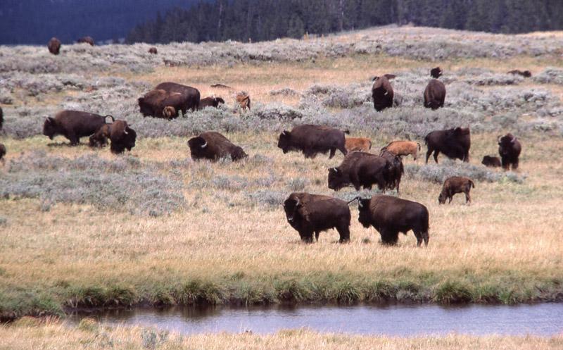 Йеллоустонский национальный парк (14)