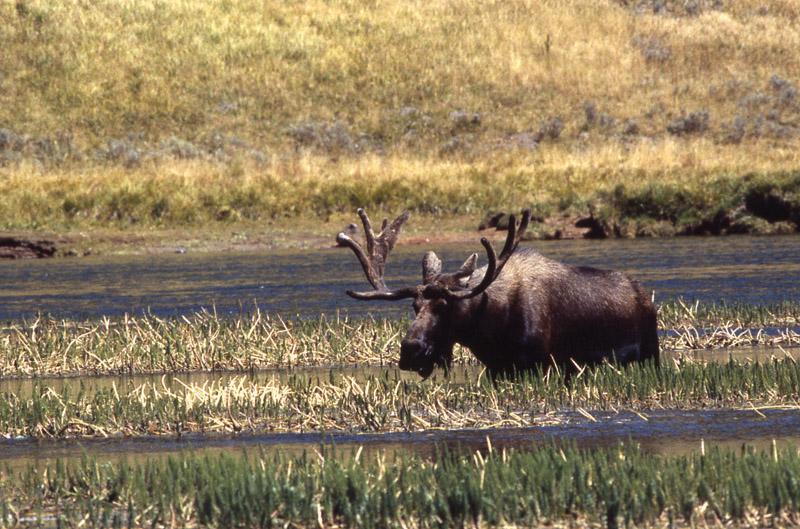 Йеллоустонский национальный парк (8)