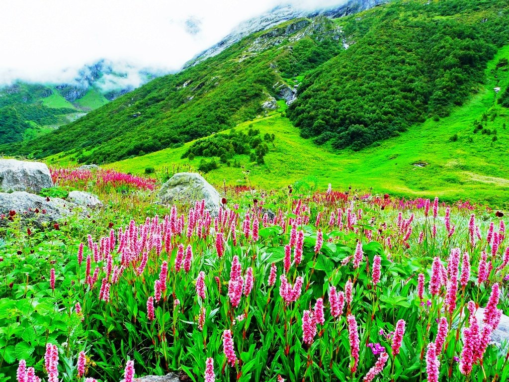 Цветы под снегом долина с кем