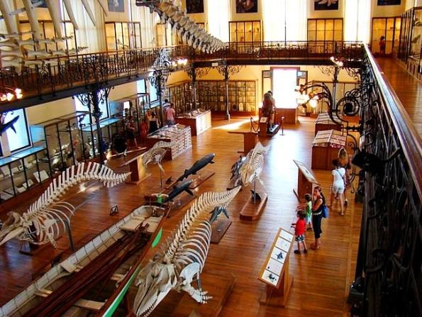 ocean museum