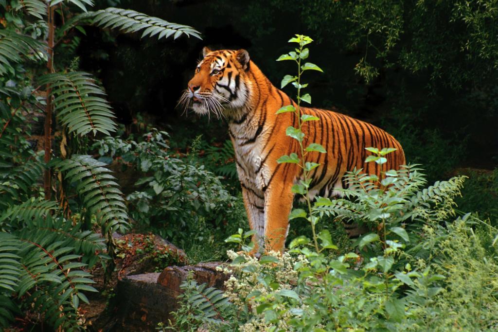 tiger1024