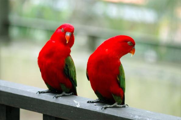 birdpark_0