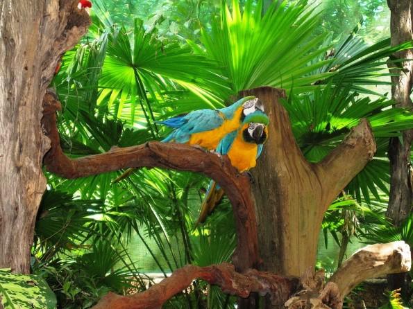 birdpark_1