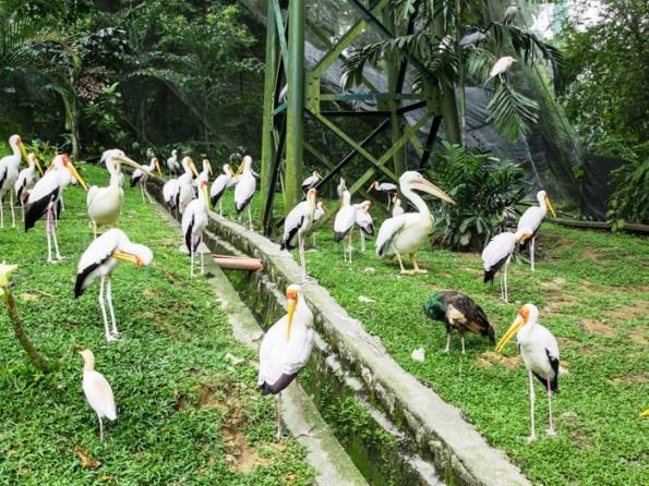 birdpark_2